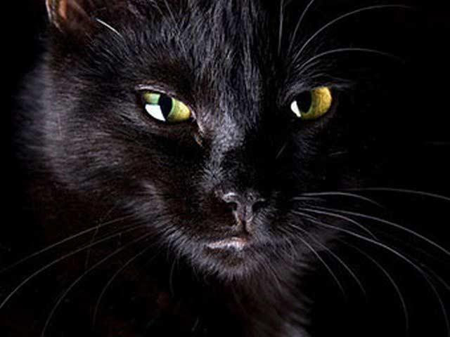 Черный кот стал владельцем 10 миллионов евро