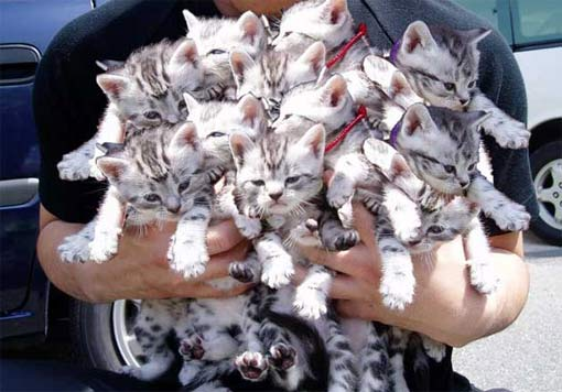 Разрушительная сила маленьких котят