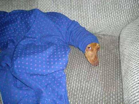 Рождественский фото пост: смешные фото собак
