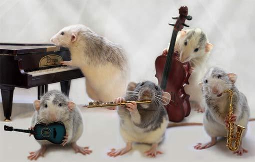 С виду мы – мыши, но поем, как райские птички