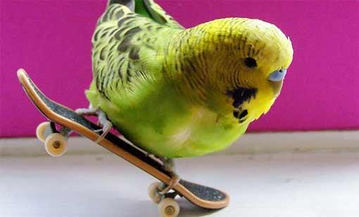 А дурак ли Попка? Рассказ о самом талантливом попугае на планете