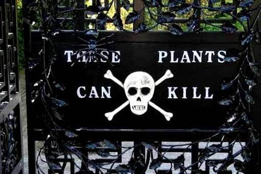 Парк, в котором растут смертельные растения