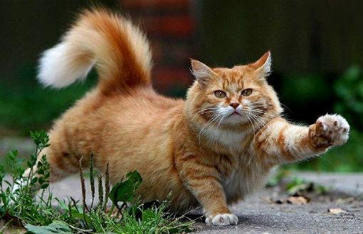 Кот бродяга любит кататься на маршрутках за чужой счет