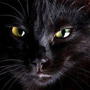 Милый черный кот держит в ужасе британскую деревню