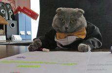 Румынский кот Босс трудоустроился менеджером в интернет-магазин