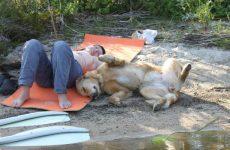 Сиеста в Италии или Почему собакам запрещают лаять