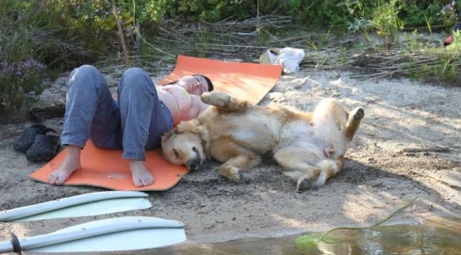 Сиеста_и_собаки