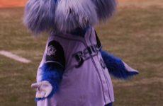 Прямая трансляция Тампа-Бей Рейз — Торонто Блу Джейс. Бейсбол. МЛБ.