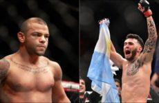Видео боя Лаурино Старополи — Тиаго Алвес UFC 237